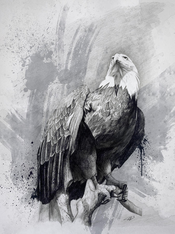 Eagle Drawing - Bald Eagle Drawing by Steve Goad