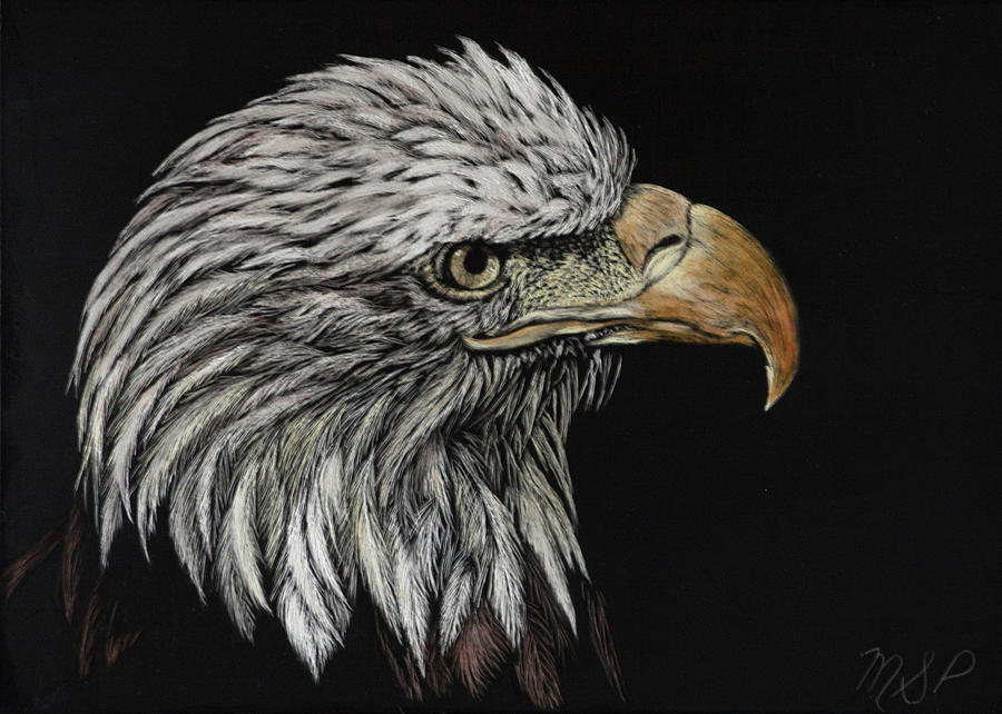 Bald Eagle Eye by Margaret Sarah Pardy