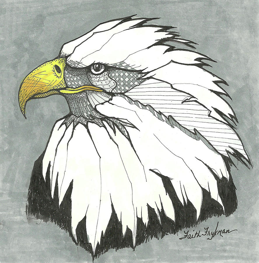 Bald Eagle, Head Drawing by Faith Frykman