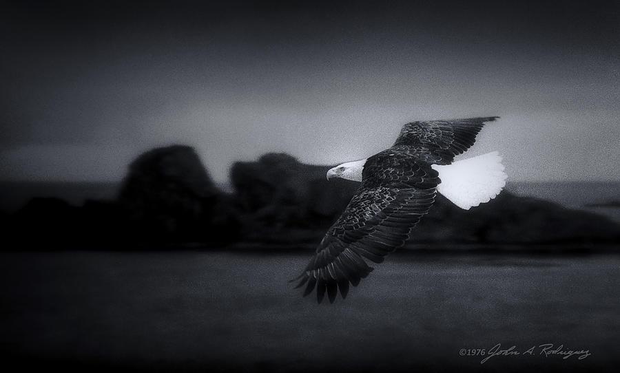 Bald Eagle Photograph - Bald Eagle In Flight by John A Rodriguez