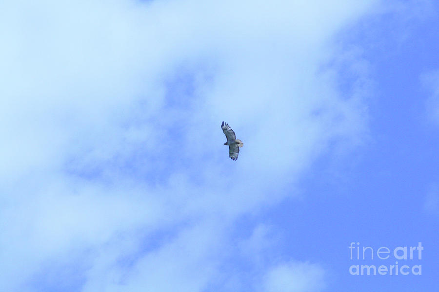 Golden Eagle Photograph - Golden Eagle In Flight by Mary Mikawoz