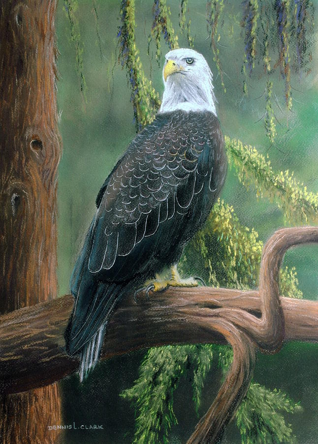 Bald Eagle Pastel - Bald Eagle In Pastel by Dennis Clark