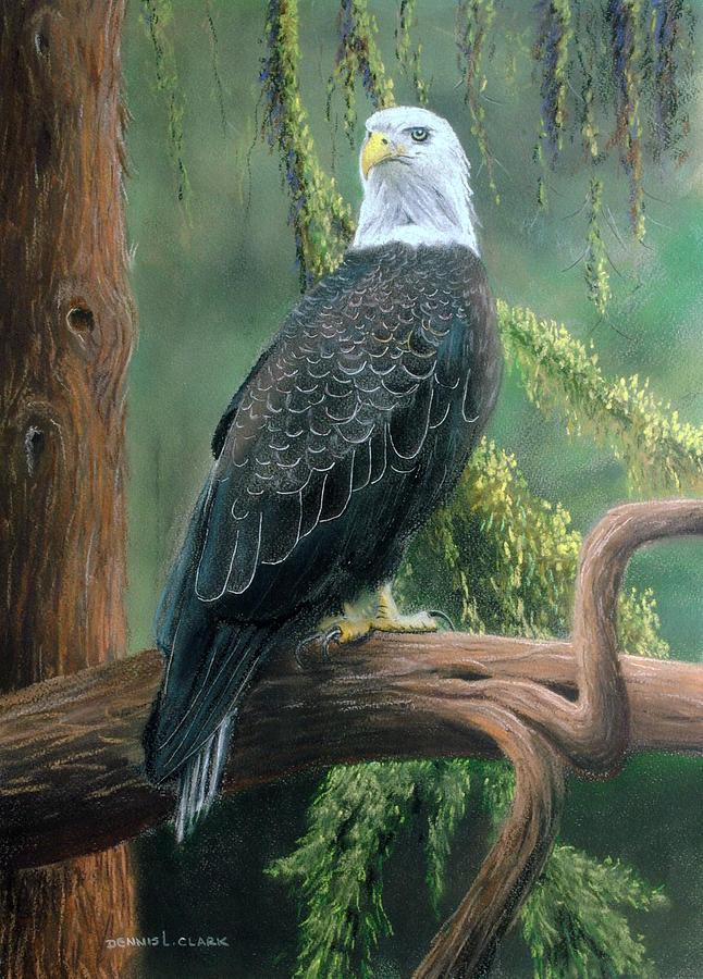 Bald Eagle Pastel - Bald Eagle in Pastel by Dennis Clark
