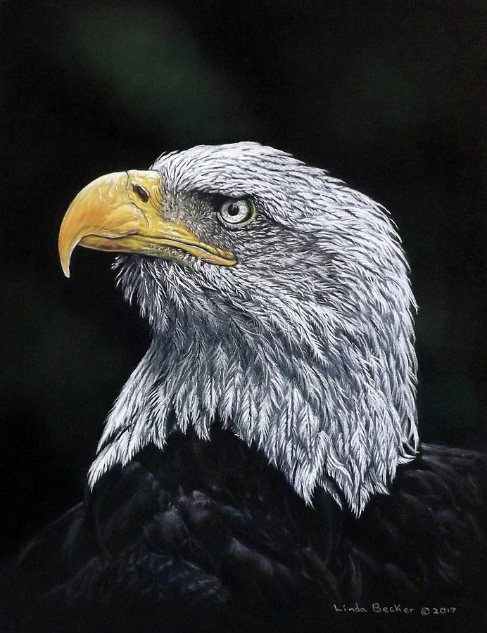 Bald Eagle by Linda Becker
