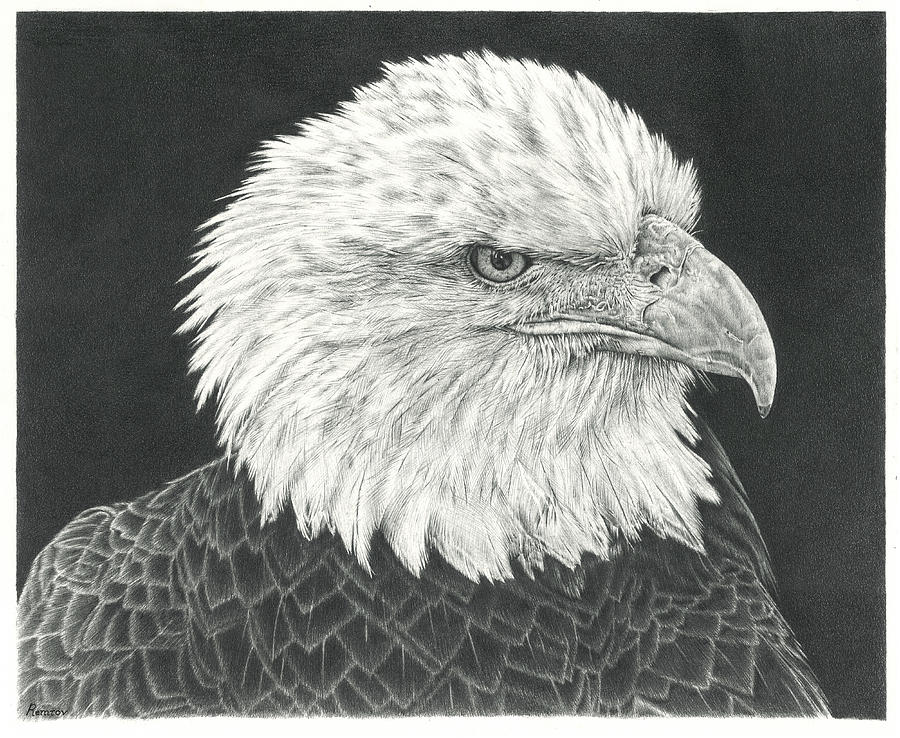 Bald Eagle by Remrov