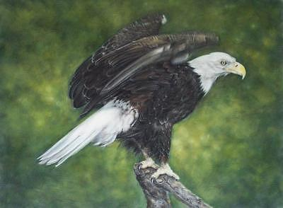 Bald Eagle Painting - Bald Eagle by Rose Baggs