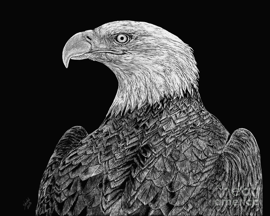 Bald Eagle Drawing - Bald Eagle Scratchboard by Shevin Childers