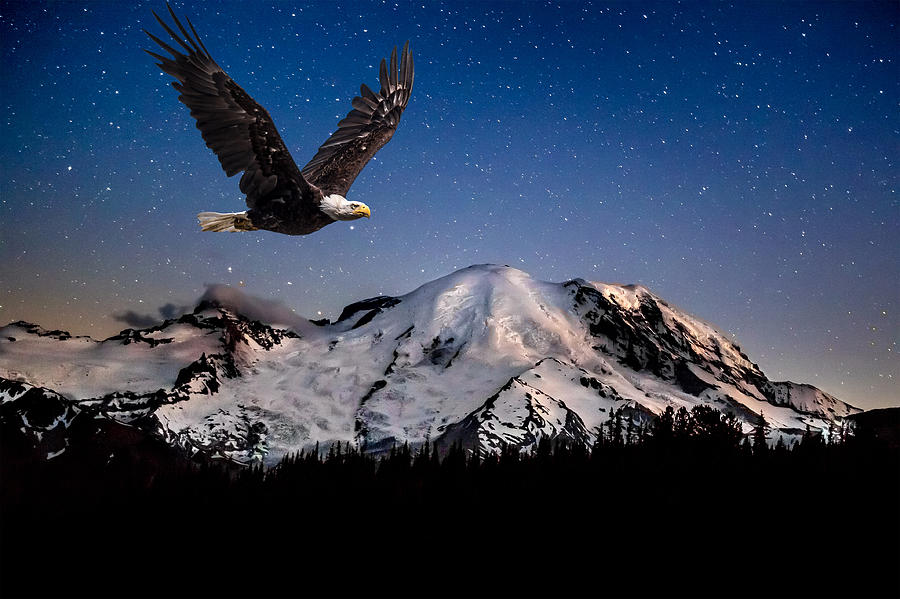 Bald Photograph - Bald Eagle Soaring by MT Rainier Under Stars by Rob Green