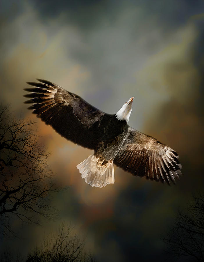 Soaring Eagle
