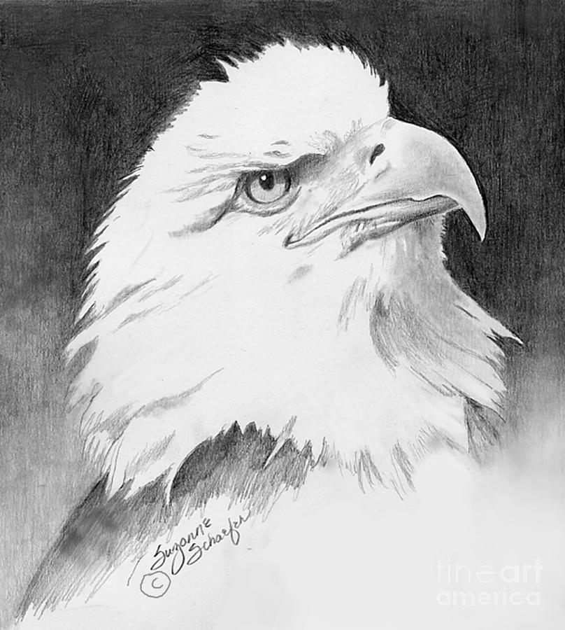 bald eagle drawing by suzanne schaefer