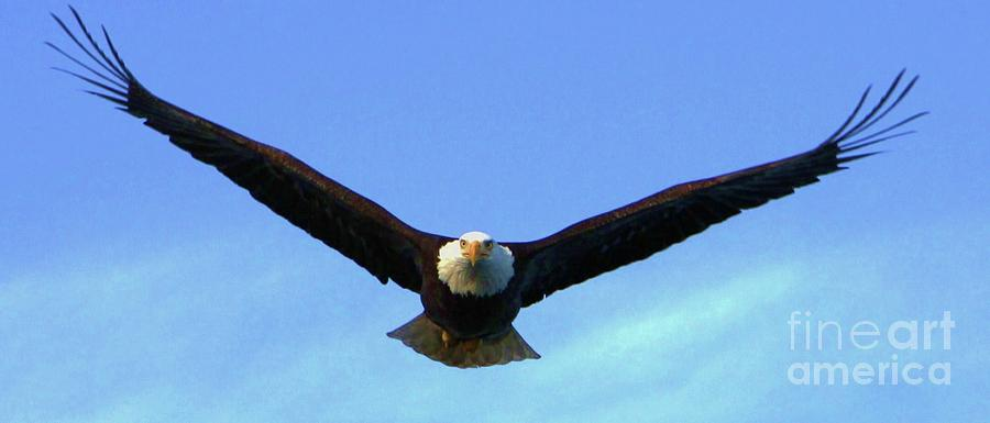 Bald Eagle Photograph - Bald Eagle Victory by Dean Edwards