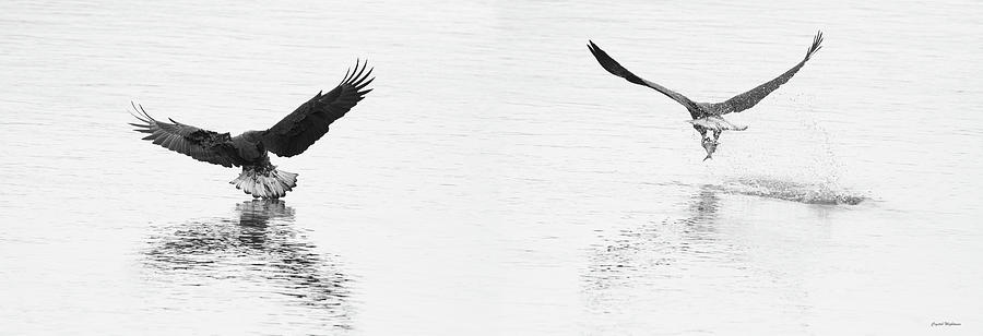 Bald Eagles Fishing by Crystal Wightman