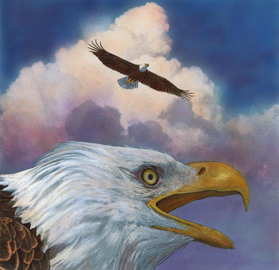 Bald Eagles by John Dyess