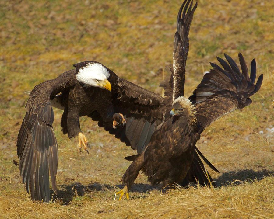 Eagles T Shirts Women S