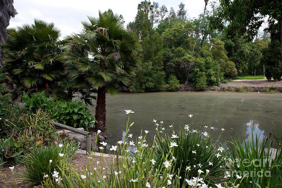 Baldwin Lake Los Angeles County Arboretum And Botanic Garden Photograph