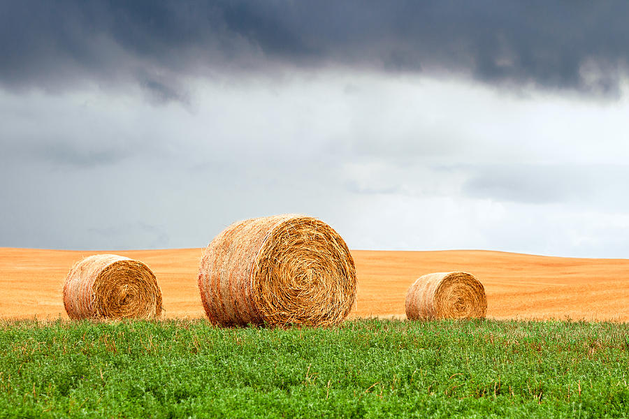 Round Bales Photograph - Bales And Layers by Todd Klassy