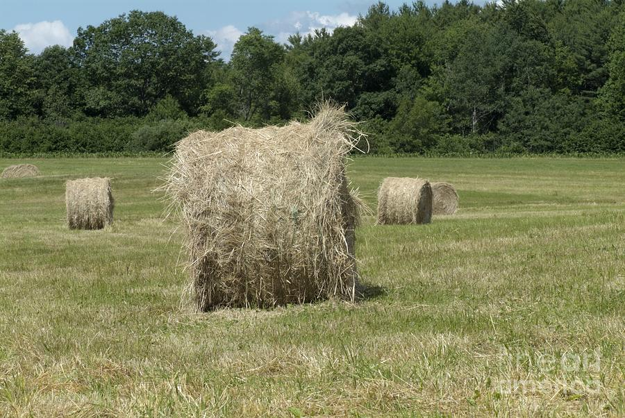 Hay Photograph - Bales Of Hay In New England Field by Erin Paul Donovan
