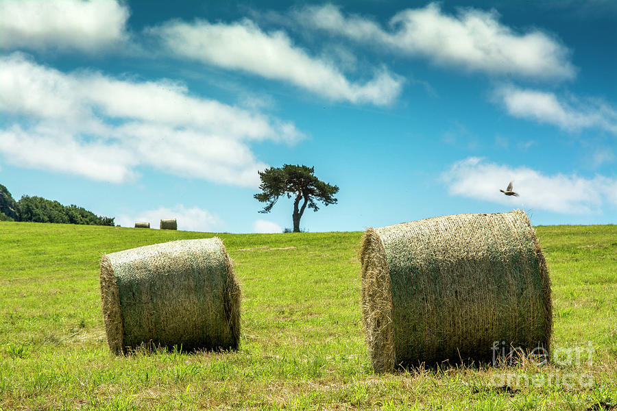 Agriculture Photograph - Bales Of Straw In A Field, Auvergne, France by Bernard Jaubert