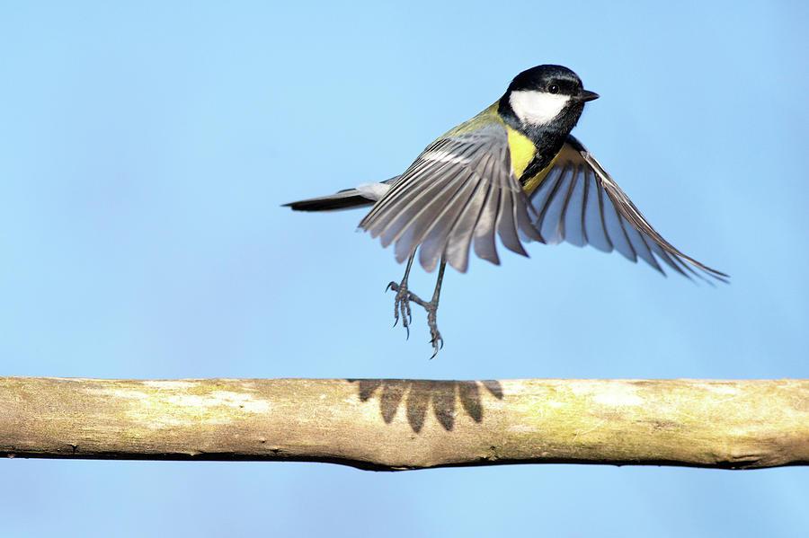 Horizontal Photograph - Ballerina Bird by Marcel ter Bekke