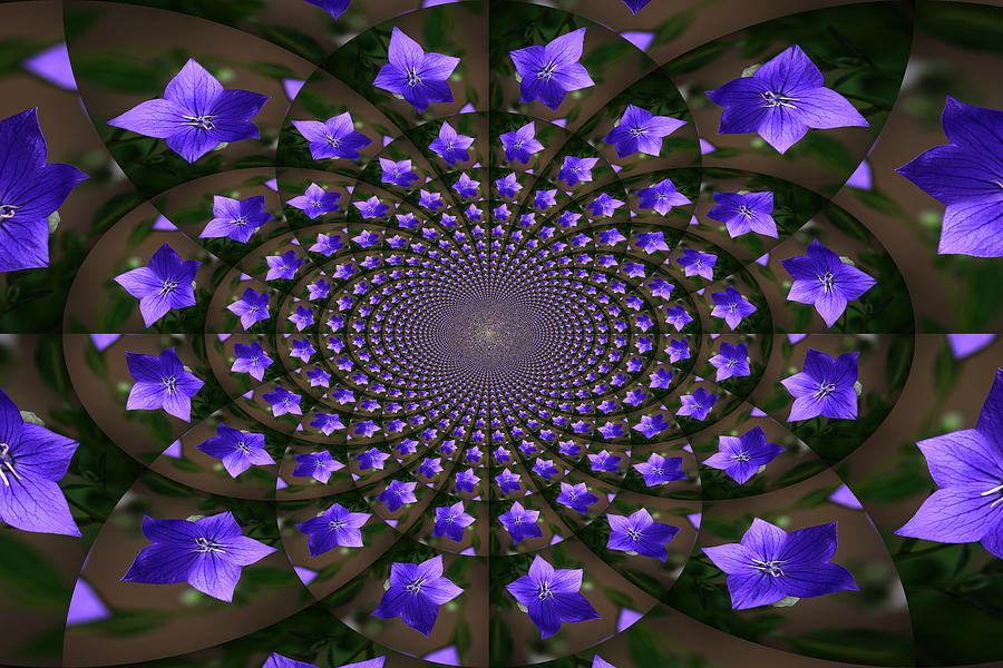 Balloon Flower Photograph - Balloon Flower Kaleidoscope by Teresa Mucha