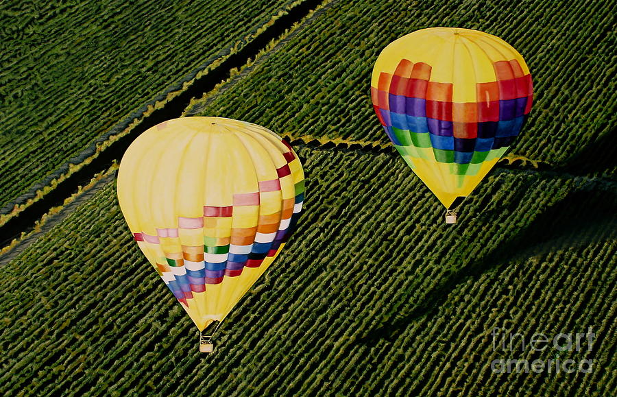 Landscapes Painting - Balloons Over Napa Valley by Cindy Lee Longhini