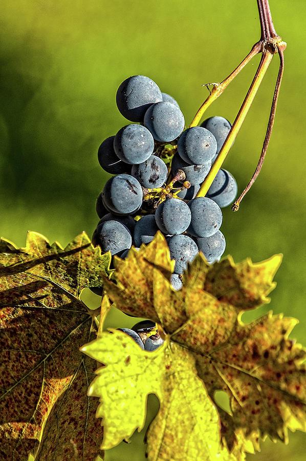 Balls of Wine by George Buxbaum