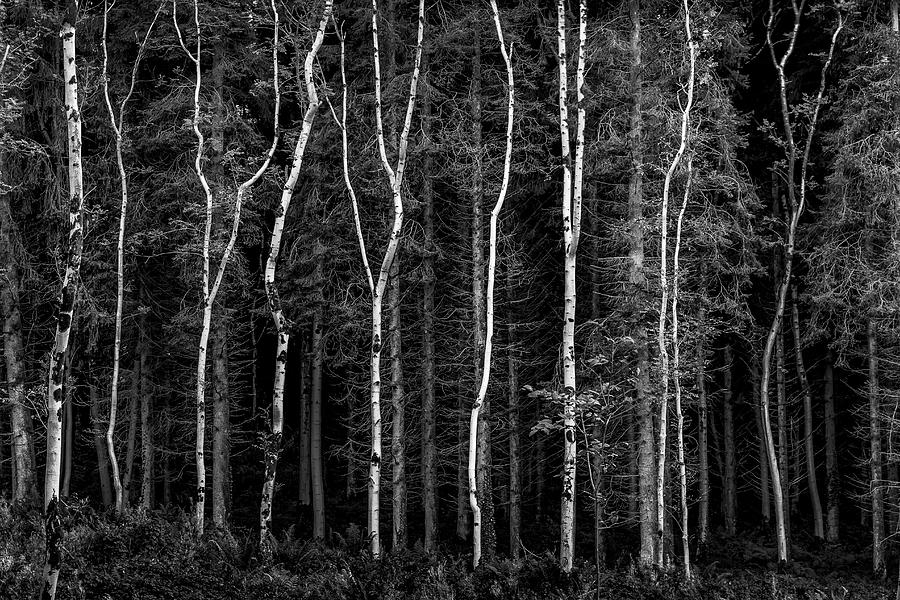 Landscapes Photograph - Ballysallagh Forest Mono by Glen Sumner