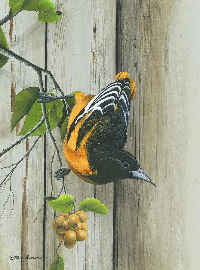 Baltimore Oriole Painting - Baltimore Oriole by Mike Brown