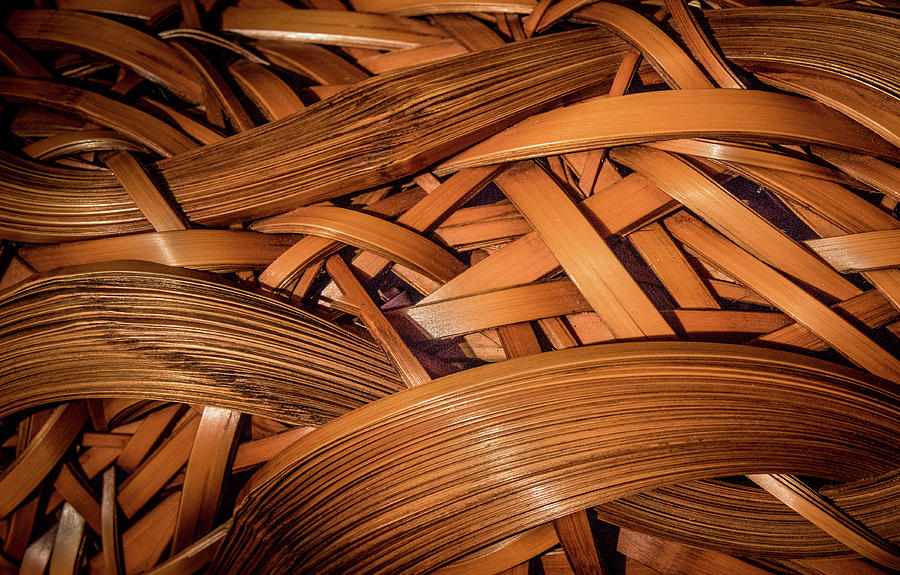 Bamboo Art Photograph