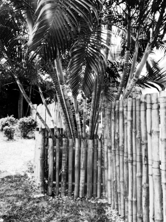 Bamboo Photograph - Bamboo Fence by Isabelle Mbore
