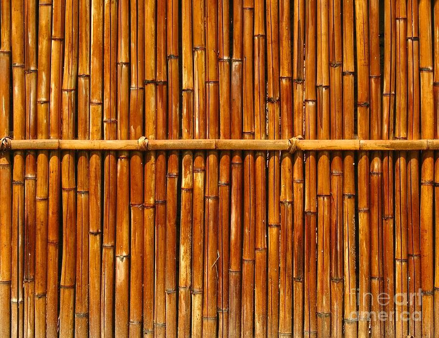 Fence Photograph - Bamboo Fence by Yali Shi