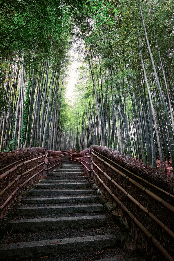 Bamboo Photograph - Bamboo Forest Of Japan by Daniel Hagerman