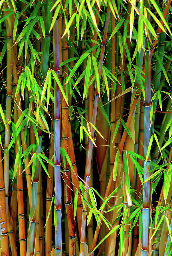 Bamboo by Harry Spitz