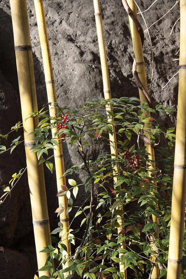 Bamboo Photograph - Bamboo by Linda A Waterhouse