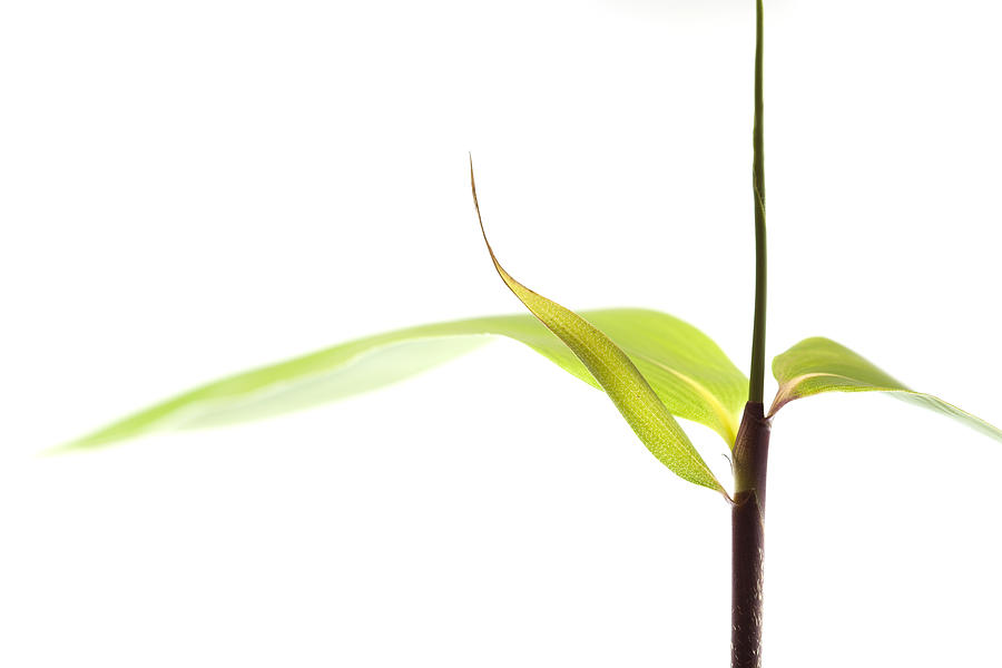 Minimalism Photograph - Bamboo Meditation 1 by Carol Leigh