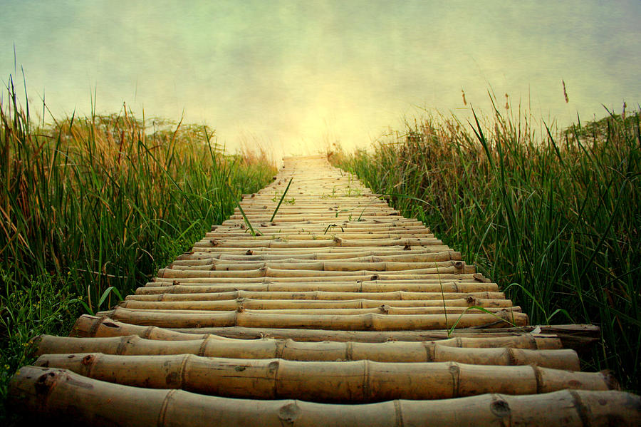 Horizontal Photograph - Bamboo Path In Grass At Sunrise by Atul Tater