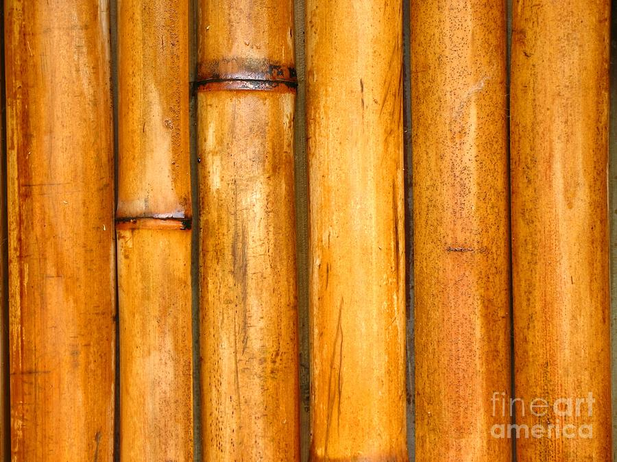 Background Photograph - Bamboo Poles by Yali Shi