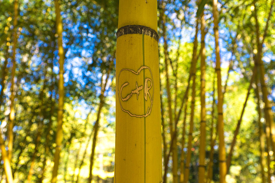Bamboo Photograph - Bamboo by William Hall