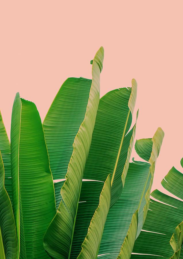 banana leaves digital art by rafael farias