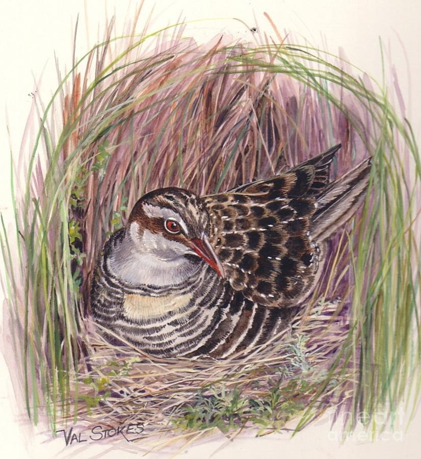 Bird Painting - Banded Rail by Val Stokes