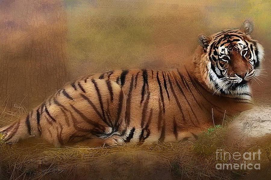 Bangal Tiger  Jasmine  by Peggy Franz
