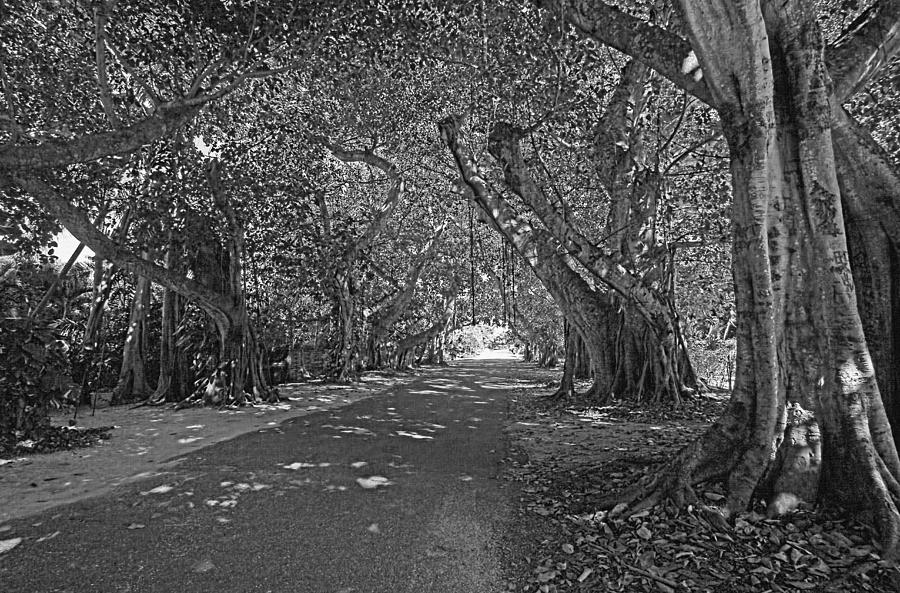 Boca Grande Fl Photograph - Banyan Street 2 by HH Photography of Florida