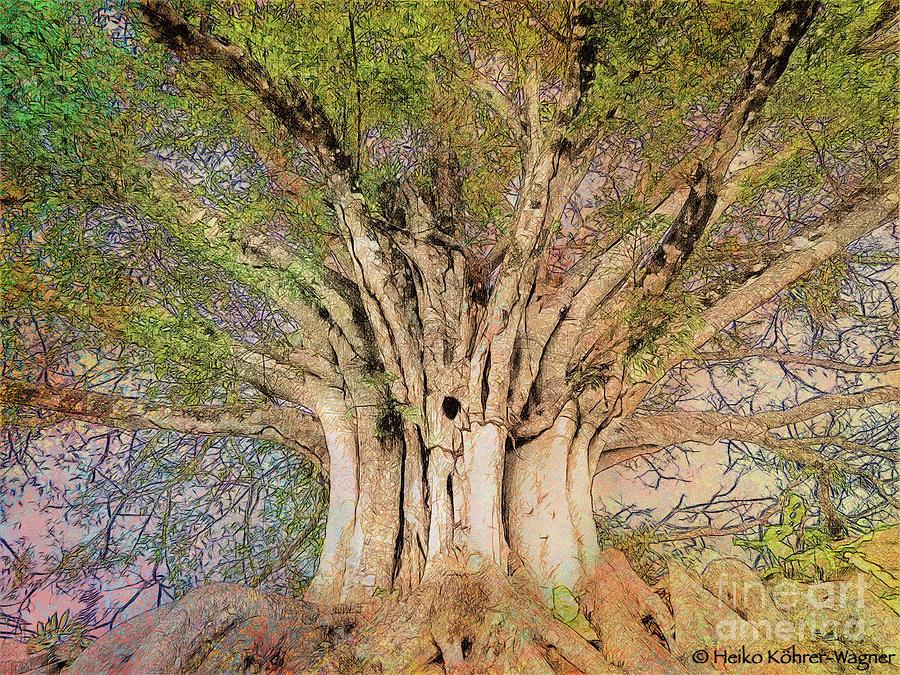 Banyan Tree Photograph