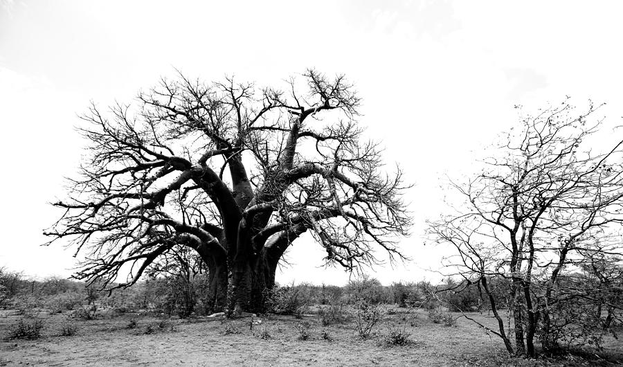 Baobab Photograph - Baobab Landscape by Bruce J Robinson