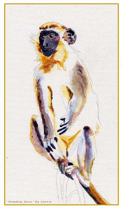 Monkey Print - Barbados Green Monkey by Corrie Scott