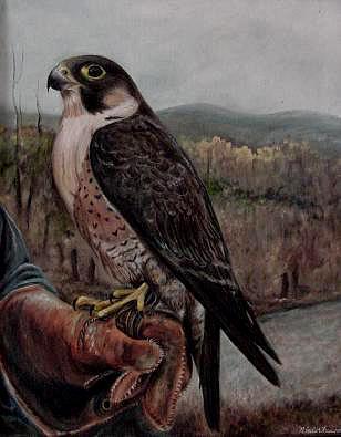Barbary Falcon Painting - Barbary Falcon by Day Seriani