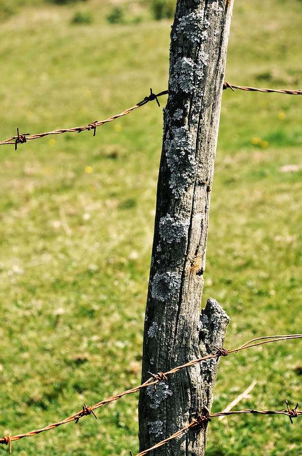 Barbed Photograph - Barbed Fence Post by JAMART Photography