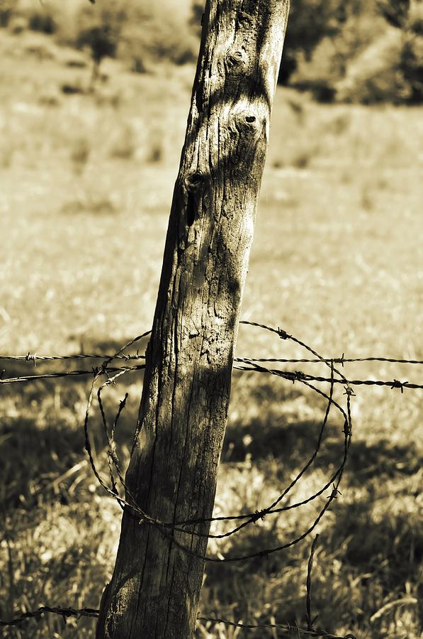 Fence Photograph - Barbed by JAMART Photography