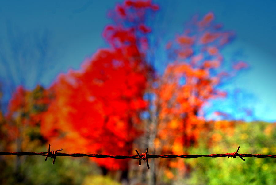 Fall Photograph - Barbwire Fall by Emily Stauring