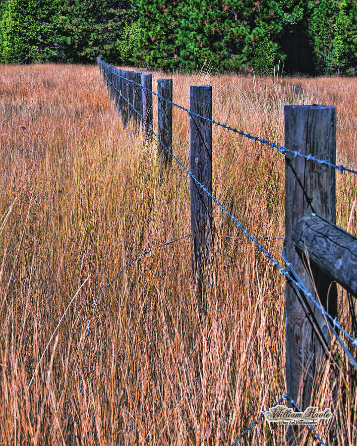 Barbwire In The Grass by William Havle